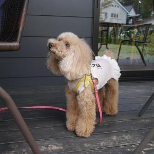 愛犬とのおでかけ2-プリン&ぶどうスイーツの美味しいお店へ♪-