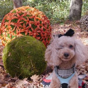 愛犬とのおでかけ2019年お誕生日旅行2-軽井沢高原教会でアートな秋を♪-
