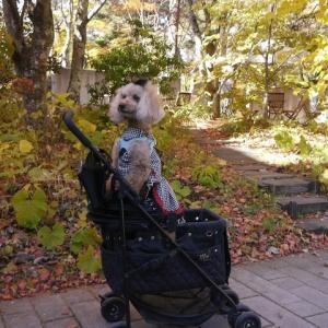 愛犬とのおでかけ2019年お誕生日旅行3-石の教会 内村鑑三記念堂へ♪-