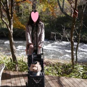 愛犬とのおでかけ2019年お誕生日旅行4-ハルニレテラスにてランチ♪-
