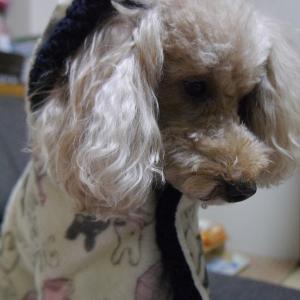 愛犬とのおでかけ2019年お誕生日旅行5-アウトレットでお買い物♪-