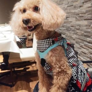 愛犬とのおでかけ2019年お誕生日旅行9-ディナー満喫♪-