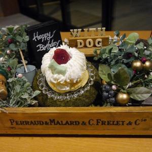 愛犬とのおでかけ2019年お誕生日旅行10-ケーキとカクテルでお祝いを♪-