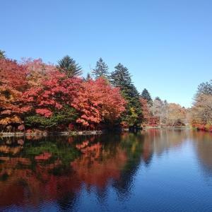 愛犬とのおでかけ2019年お誕生日旅行13-雲場池の紅葉♪-