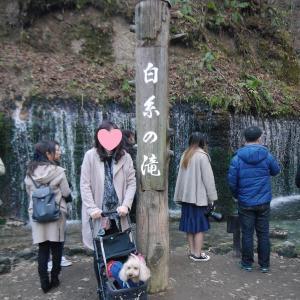 愛犬とのおでかけ2019年お誕生日旅行17-白糸の滝へ♪-