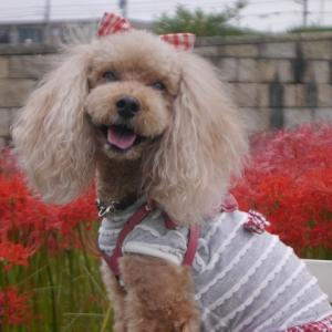 真っ赤なお花って綺麗ですよね~♪