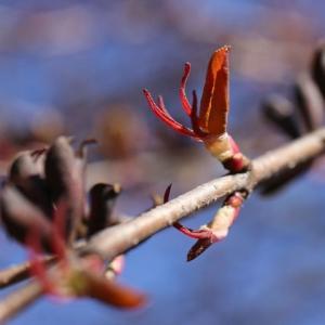 春めく藻岩山麓へ