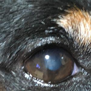 角膜ジストロフィと節約生活