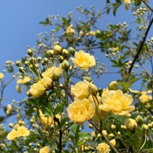 春の花 咲く道を~ (Ο´∇`Ο)
