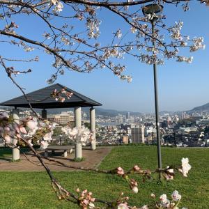 桜狩りしてきまーす (❤╹ω╹❤)ワーイ ワーイ♡