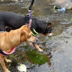 給水ポイントのグルメ犬 (๑ ❛ ڡ ❛ ㅅ)ペロ♡