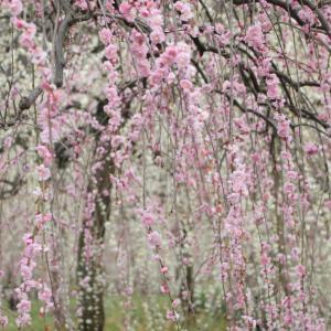 前のめり気味に  春を探しに delaファームへ!