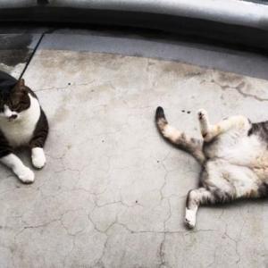 可愛すぎる猫の写真とBRUNO ホットサンドメーカー