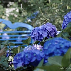 青いベンチ。