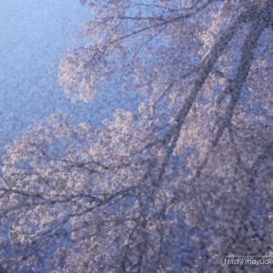 心の中の春。