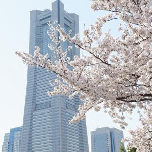 ランドマークタワーと桜。