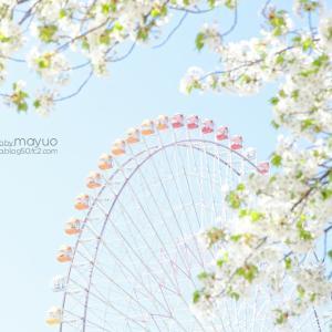 桜と観覧車。