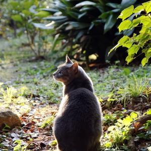 江の島の 猫。