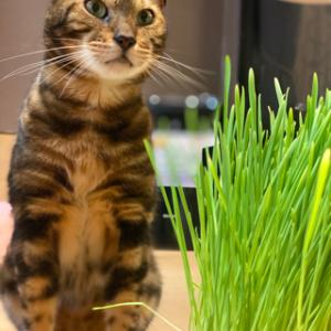 猫草がお得です!