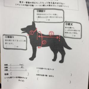 愛犬のサイズ、分かりますか?