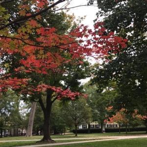プリンストンの紅葉