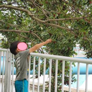 ★子供撮りカメラ、私の作例写真集:2020年6月(オリンパスE-M10mark3+パナ45-175mm)
