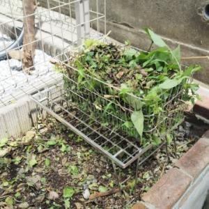 ★虫がわかず通気性のよいステンレス製!草むしり用「刈り草処分カゴ」を用意しました