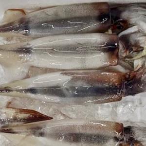 自家製イカの糀塩辛