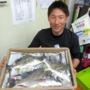 浜名湖 キビレ釣れました