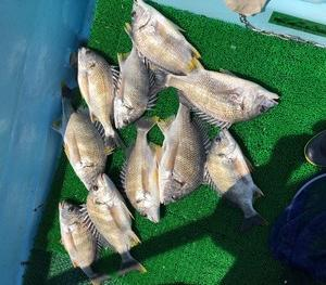浜名湖キビレ釣りの釣果投稿頂きました