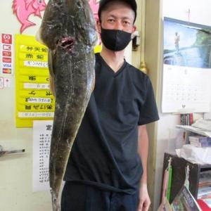 浜名湖 マゴチ 60アップ釣れました 青物も