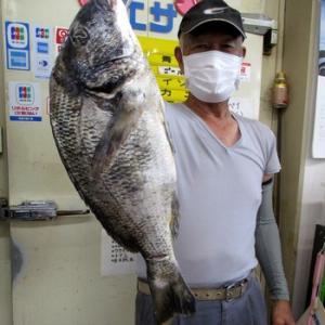 49.5cm ルアーフィッシングで黒鯛