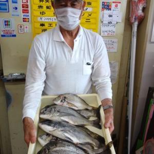 浜名湖ルアー オカッパリで黒鯛釣れました