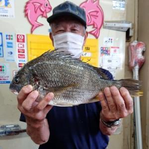 オカッパリ ルアーでキビレ釣れました