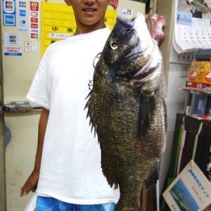 黒鯛48センチ釣れました