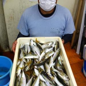 浜名湖 アジ釣りの釣果
