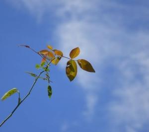 秋の日のトホホホのため息の
