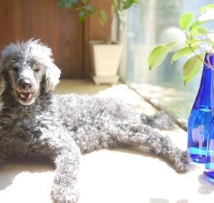 ママの視点が変われば犬も変わります ~吠える・噛むについて