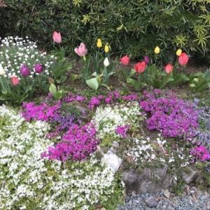 今年の春の花壇