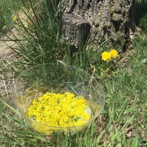 今日はキンバースディ☆ 黄色い種の13日間のはじまりの日