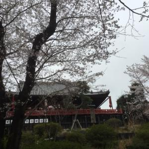 桜の頃  東京 神社 お散歩