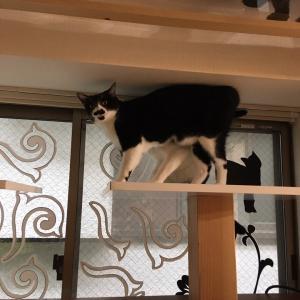 保護猫カフェの学び
