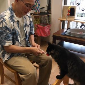保護猫カフェの学び2