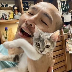 奇跡☆チャピコ、猫エイズ陰転!