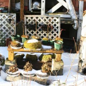 つれづれ:冬の庭は苔の生命力と輝きがきりっとした空気と日差しが・・・