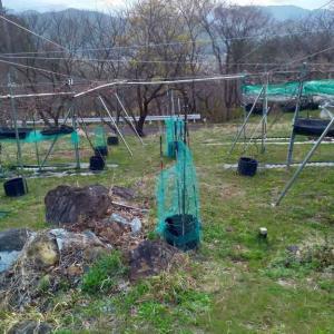 山ぶどう園報告:隣どうしの垣根の間に棚を設置して甲州種を栽培予定