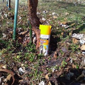 山ぶどう園報告:今年は根元に虫を入れない様な完全対策を期待して