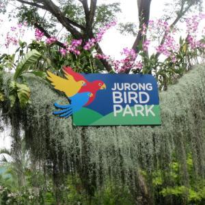 ジュロン・バードパーク ♪ 小鳥さんの巣作りを観察