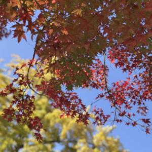 松島観光(1)美しすぎる紅葉♪
