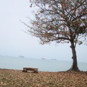 シンガポールで小さい秋を見つける
